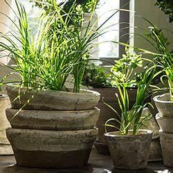 Bambus Pflege Zimmerpflanze : zimmerpflanzen standort pflege gie en d ngen ausputzen ~ Michelbontemps.com Haus und Dekorationen