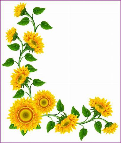 Sunflowers Watercolor Simple Clipart Transparent Daisy Nicepng