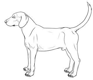 hound dog lineart cm  galianogangster digital art