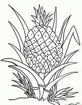 Pineapple Fruit Coloring Pages sketch template