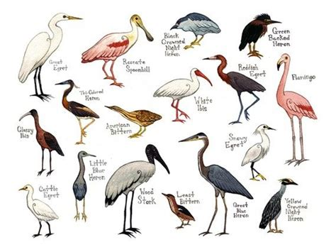 10 images about birds list names on pinterest herons