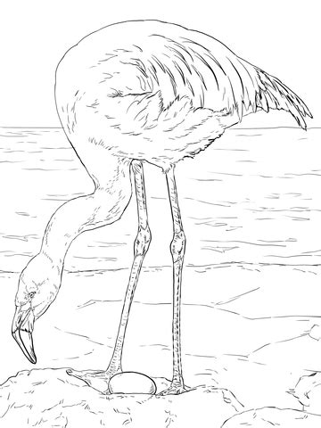 chilean flamingo coloring page supercoloringcom