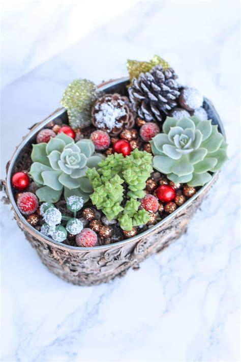 christmas succulent - Natalie Linda