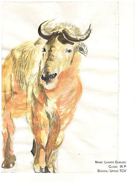 world environment daytibetan animal drawing competition