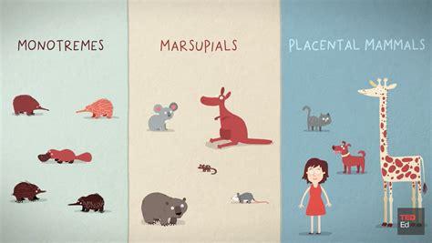 The three different ways mammals give birth Mammals