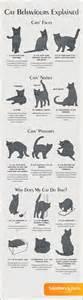 cat behaviors cat behaviors explained steemit