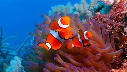 Ocean Sea Fish Underwater Sealife Wallpapers Fishes