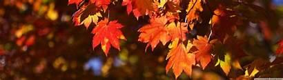 Dual October Japan Wallpapers Autumn Monitor Desktop