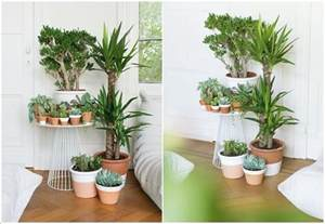 Living Room Interior Design Ideas Pinterest by 15 Amazing Ideas To Display Your Indoor Plants