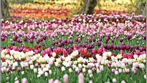 Britzer Garten Eingang Massiner Weg by Obstb 228 Ume In Berlin Johanna Wanka Wirbt F 252 R Quot Mundraub