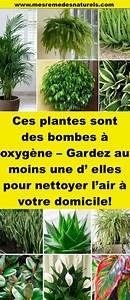 Air A Domicile : ces plantes sont des bombes oxyg ne gardez au moins ~ Melissatoandfro.com Idées de Décoration