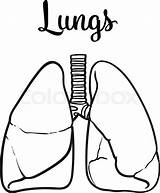 Lungs Lung Vector Human Sketch Drawn Drawing Illustration Clipart Hand Healthy Person Realistic Tuberculosis Background Asthma Anatomy Isolated Clipartmag Clean sketch template