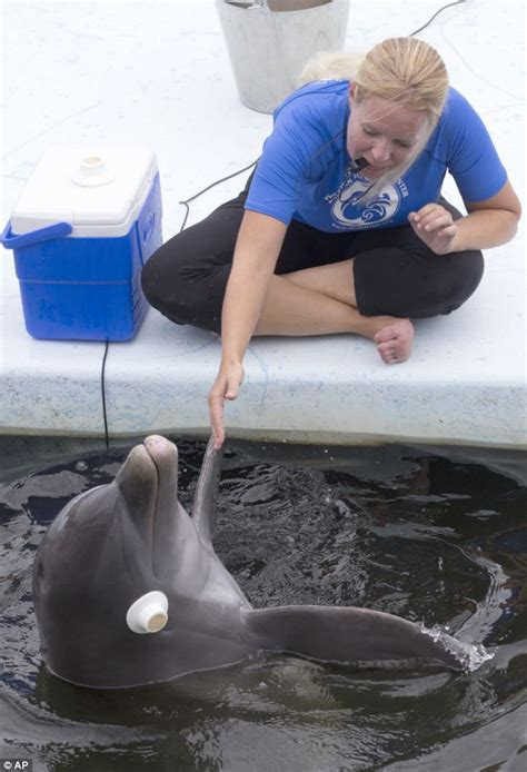 How To Become A Dolphin Trainer & Why It's A Great Job. Northern California Spiders Texas Tech Mba. Email Marketing Analytics 3rd Party Warehouse. Farmers Insurance Tacoma Wa Metro Eye Care. Certified Special Events Professional. The Furnace Birmingham Al Washer Repair Tulsa. University Of Nebraska Omaha. Dealerships In Victoria Tx Fly Pest Control. How To Qualify For Reverse Mortgage