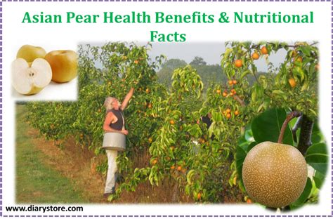 asian pear nutritional information png 1000x659
