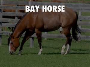horse colors breed bay juan