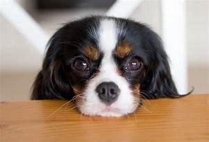 Breaking Customers Furious As Purina Buys Merrick Pet