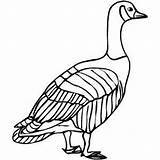 Goose Coloring Sheet Birds Samples Freecoloringsheets Index sketch template