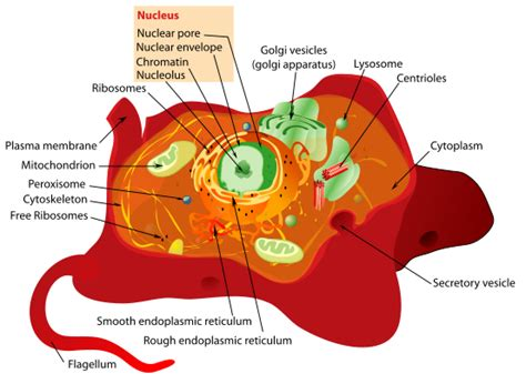 medical pictures info cytoplasm