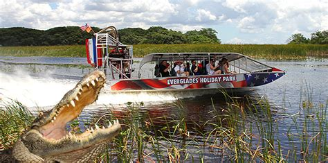 Everglades Boat Tours Alligators by Why Airboat Tours And Alligators Go Together