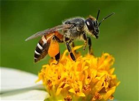 wespen bloemen bijen en wespen het verschil tussen bijen en wespen
