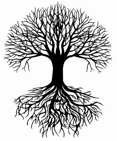 Roots Tree Transparent Silhouette Clip Clipart Root