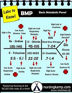 Bmp Basic Metabolic Panel