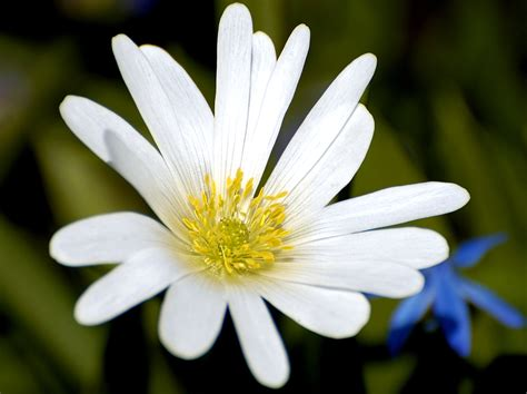 pictures of a flower file white flower closeup jpg wikimedia commons