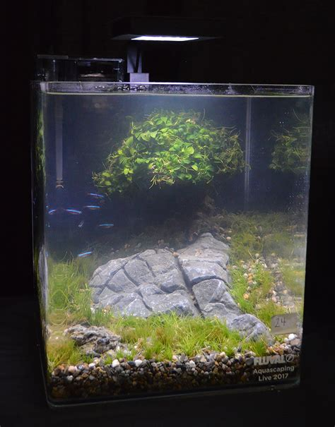 Small Tank Aquascaping by Aquascaping Live 2017 Small Planted Tanks