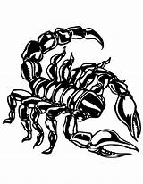 Scorpion Coloring Pages Printable Drawing Getcoloringpages Colors Shells Desert Beach Animal sketch template