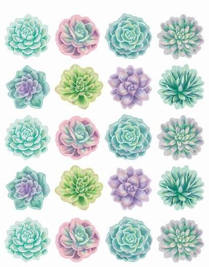 Succulents Stickers Rustic Bloom Collants Rustiques Fleurs