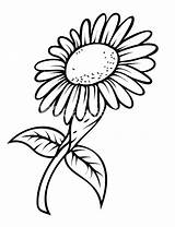 Sunflower Drawing Coloring Drawings Pages Template Google sketch template