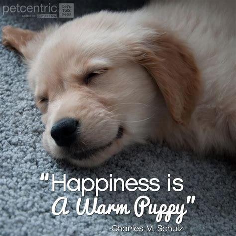 happiness   warm puppy charles  schulz  true