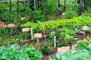 5 Secrets Of A High Yield Gardening Vegetable Gardening