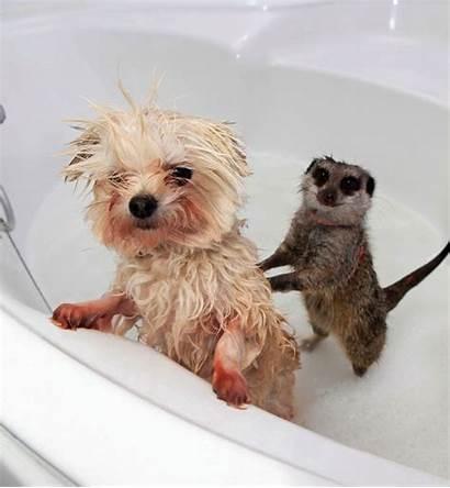 Animals Taking Bath Baths Adorable Seenox Cutest