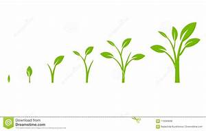 Tree Growth Diagram With Green Leaf  Stock Vector
