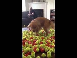 Excited Dog Gets 800 Tennis Balls for His Birthday - Neatorama