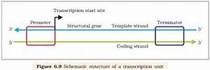 genomics what is the difference between coding and non With difference between template and coding strand