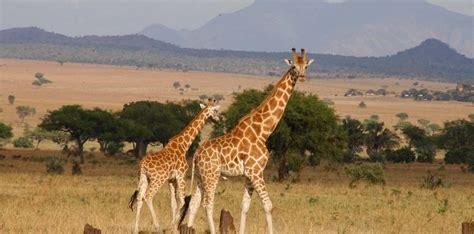 6 Days Pian Upe and Kidepo Wildlife Safari   Uganda Safari ...