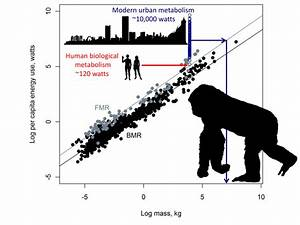 Energy Use As A Function Of Body Mass In Mammals And Human