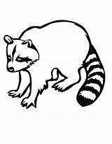 Raccoon Coloring Pages Printable Racoon Mario Easy Drawing Outline Clipart Cartoon Line Template Drawings Colouring Clip Cliparts Getdrawings Library Designlooter sketch template
