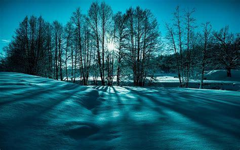 750x1334 beautiful snow green nature landschaft schnee winter natur sch 246 nheit hd desktop