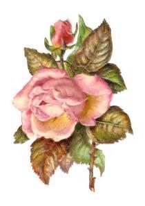 Vintage Pink Rose Clip Art
