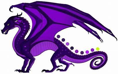 Wings Dragon Fire Purple Rainwing Magnificent Dragons