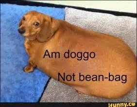 Doggo Nice Meme