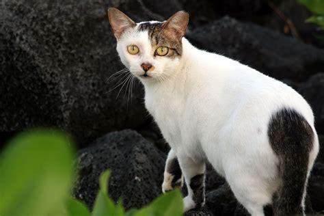 stray cat trap feral cat wikipedia