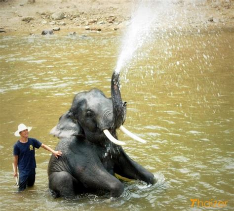Shower Head Mount by The Elephant In Thailand