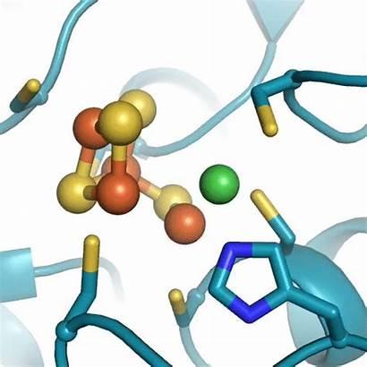 Enzyme Converting Revealed Elife Secrets Metal Credit