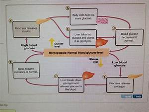 31 The Diagram Shows The Steps In The Homeostasis Pathway