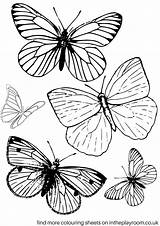 Colouring Butterfly Butterflies Printable Colour Draw Playroom Finally sketch template