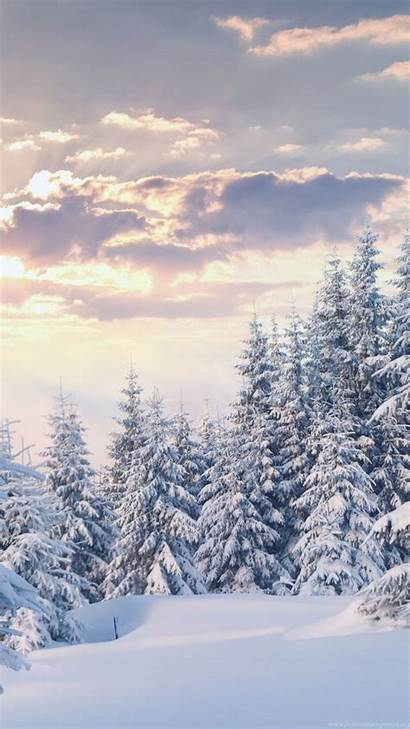Winter Forest 4k Snow Wallpapers Background Desktop